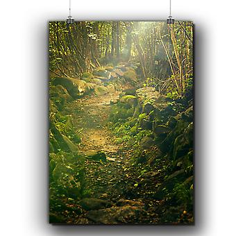Matte or Glossy Poster with Green Natural Forest | Wellcoda | *q249