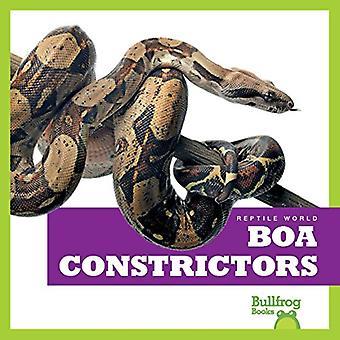 Boa Constrictors (Reptile World)