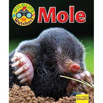 Wildlife Watchers: Mole: 2017 (Ruby Tuesday Readers)
