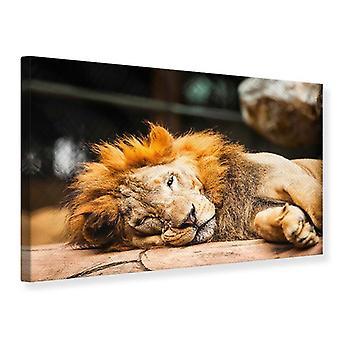 Canvas Print ontspannen Leeuw