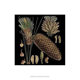 Small Dramatic Conifers VI Poster Print (13 x 19)