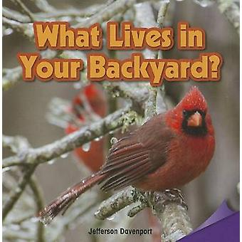What Lives in Your Backyard? by Jefferson Davenport - 9781477726082 B