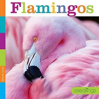 Seedlings - Flamingos by Quinn M Arnold - 9781628324822 Book