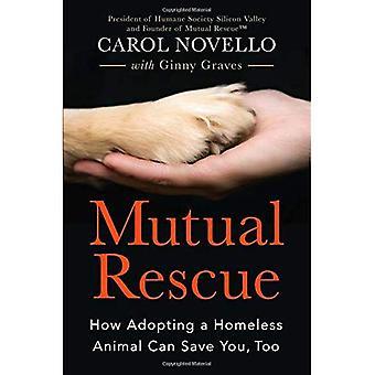 Resgate mútuo: Como adotar um Animal sem abrigo pode salvá-lo, também