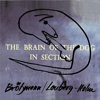 Brotzmann/Lonberg-Holm - hjerne af hund i afsnittet [CD] USA import