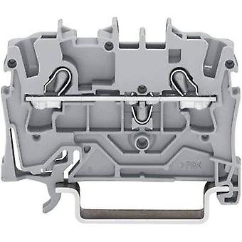 Continuity 5.20 mm Pull spring Configuration: L Grey