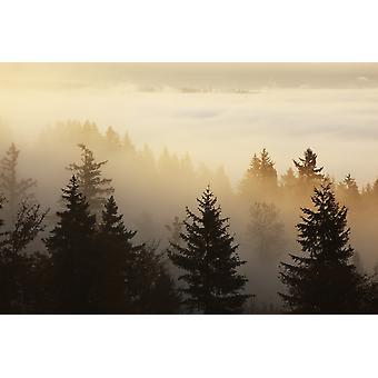 Happy Valley Oregon Vereinigte Staaten A Wald im Tal mit Nebel bei Sonnenaufgang PosterPrint