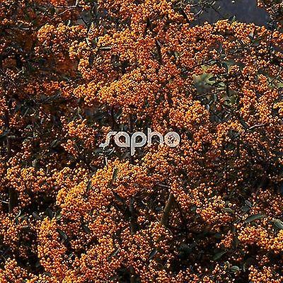 Pyracantha Saphyr Cadaune - Firethorn