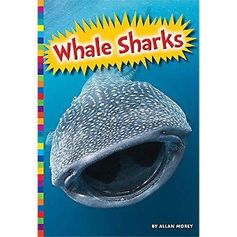 Whale Sharks by Allan Morey - 9781681520940 Book