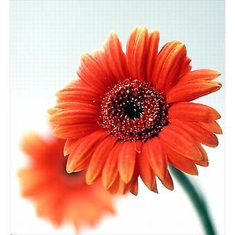 Two orange flowers, 1999 (colour photo) by.. - Mug (11oz Ceramic)