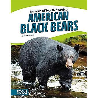 American Black Bears (Animals of North America)