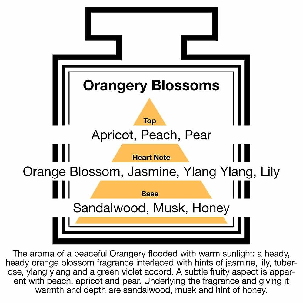 Large & Natural Reed Diffuser - Long-lasting & Healthy - Beautiful Perfumes that Compliment You - Fragrances for 6 - 9 months (250 ml) - by PAIRFUM - Perfume: Orangerie Blossoms - with Black Reeds