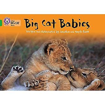 Les bébés félins: Bande 05/vert (Collins Big Cat)