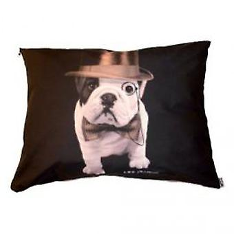 Chadog Cushion Teo Dandy (Dogs , Bedding , Matresses and Cushions)