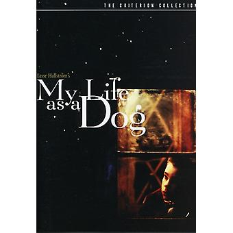 My Life as a Dog (1985) [DVD] USA import