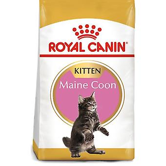 Royal Canin Kitten Maine Coon 36 (Cats , Cat Food , Dry Food)