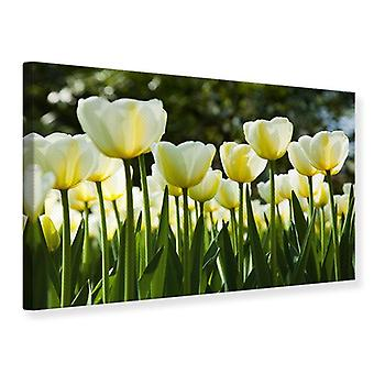 Canvas Print Tulips At Sunset