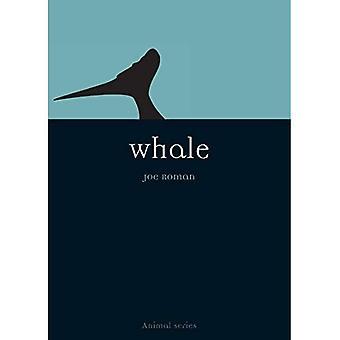 Whale (Animal)