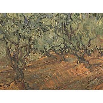 Olive Grove:Bright Blue Sky,Vincent Van Gogh, 45.5x59.5cm