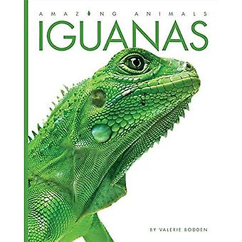 Iguanas (Amazing Animals)