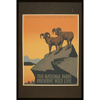 The National Parks Preserve Wild Life Poster Print Giclee