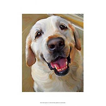 Yellow Dog Smile Poster Print by Robert McClintock (13 x 19)