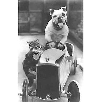 Va-Va-Vroom, Bully und seine Katze go racing! Gruß-Karte