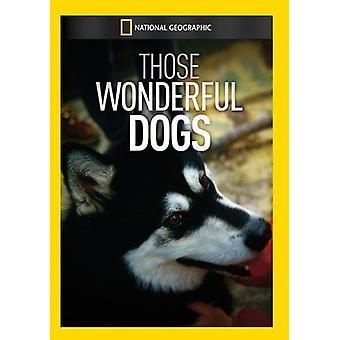 Diese wunderbaren Hunde [DVD] USA importieren