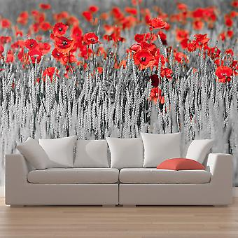 Wallpaper - Red poppies on black and white background