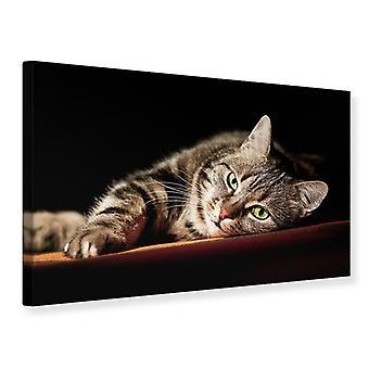 Leinwand drucken entspannte Katze