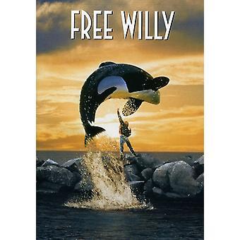 Gratis Willy 1 [DVD] USA importerer