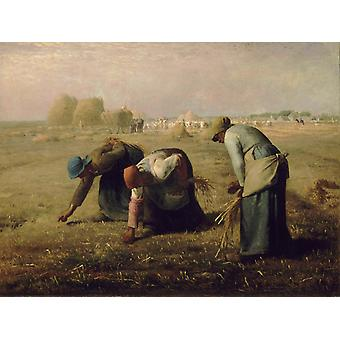 The Gleaners, Jean Francois Millet, 50x40cm