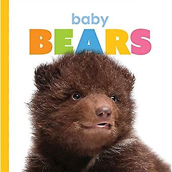Bébé ours (débutant)
