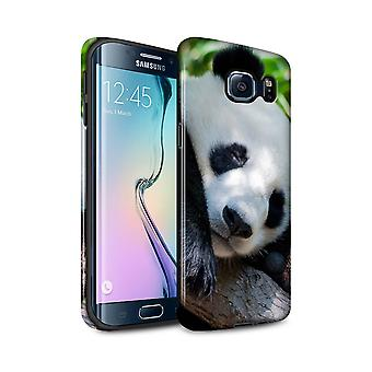 STUFF4 Gloss Tough Case for Samsung Galaxy S6 Edge+/Panda Bear/Wildlife Animals