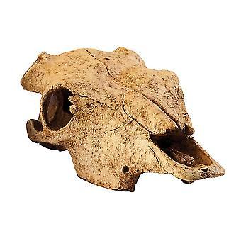 Exo Terra Buffalo Skull-medium