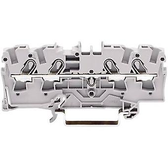 Continuity 6.20 mm Pull spring Configuration: L Grey