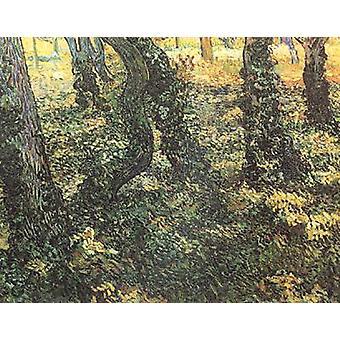 Baumstämme mit Efeu, Vincent Van Gogh, 50x40cm