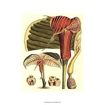 Botanical Fantasy II Poster Print (13 x 19)