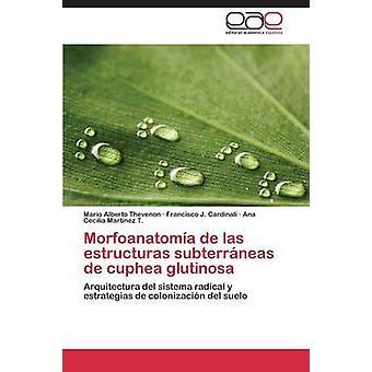 Morfoanatomia de Las Estructuras Subterraneas de Cuphea Glutinosa von Thevenon Mario Alberto