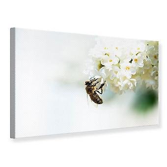 Tela de impressão da abelha e a flor