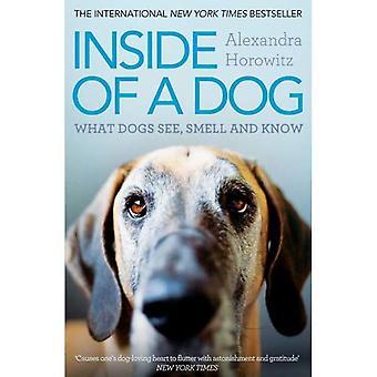 All'interno di un cane: cosa cani vedere, annusare e conoscere