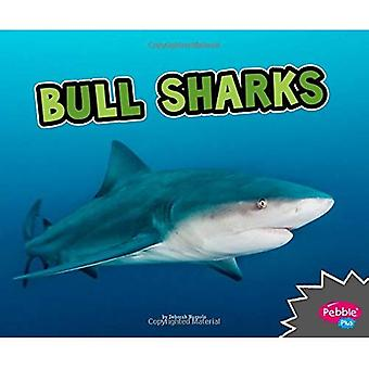 Bull Sharks (All about Sharks)