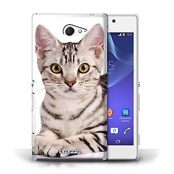 STUFF4 Phone Case / Cover for Sony Xperia M2 / American Shorthair Design / Cat Breeds Collection