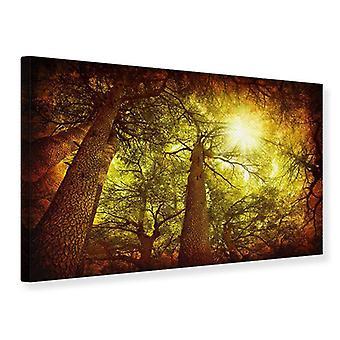 Canvas Print Cedar Tree