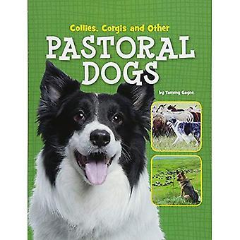 Collies, Corgis och andra pastorala hundar (Edge böcker: hund filer)