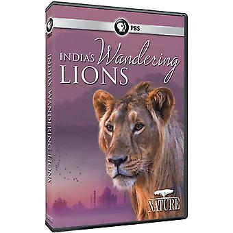 Nature: India's Wandering Lions [DVD] USA import