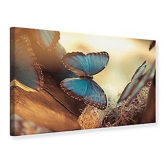 Leinwand drucken Schmetterlinge