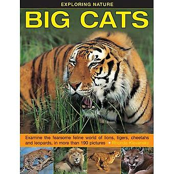 Exploring Nature: Big Cats: Examine the Fearsome Feline World of Lions, Tigers, Cheetahs and Leopards, in More...