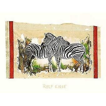 Two Zebras Poster Print by Rolf Knie (32 x 24)