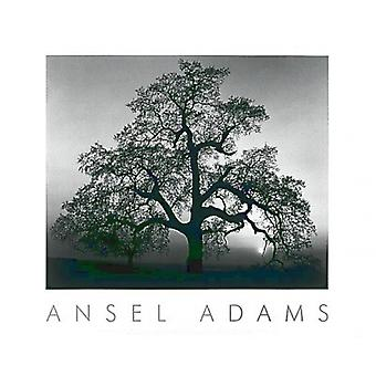 Oak Tree-zonsondergang City Poster Print by Ansel Adams (30 x 24)